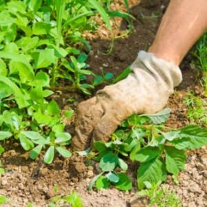 piante infestanti rimedi naturali