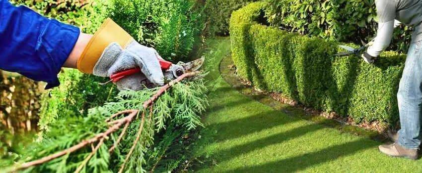 lavoro-professionista-giardinaggio