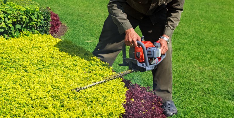 Il giardino ha bisogno: tutti i lavori da fare