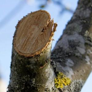 albero-segato-motosega