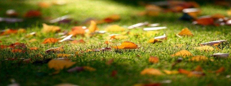 I lavori di giardinaggio nel mese di ottobre - Magica Servizi, manutenzione giardini .
