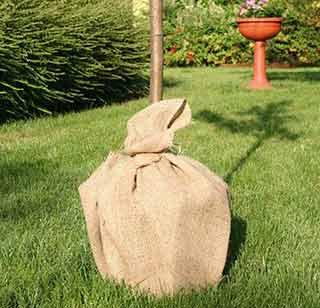 Ricordatevi di proteggere le vostre piante con apposite coperture, come questa di juta