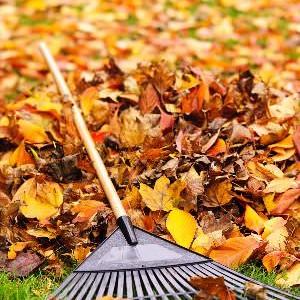 È importante rastrellare via le foglie cadute dagli alberi per mantenere in salute il vostro giardino.