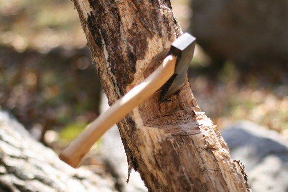 Con la scure si procede a fare un taglio a spicchio su un lato del tronco. Tra gli attrezzi di cui dovrete disporre ci dovrà essere la scure.