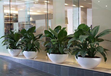 Arredo verde: piante in vaso in Hotel a Milano.