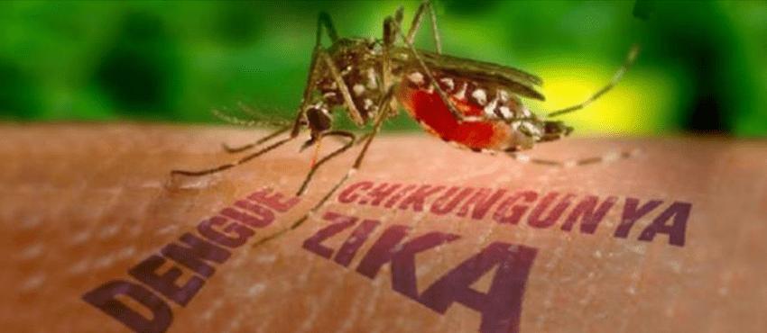 Il virus Zika, trasmesso dalle zanzare, sta creando allarme anche in Europa