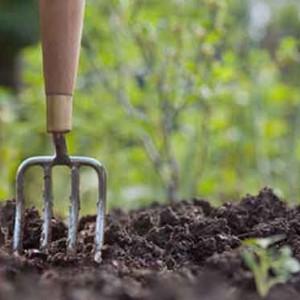 giardino-ecco-5-consigli