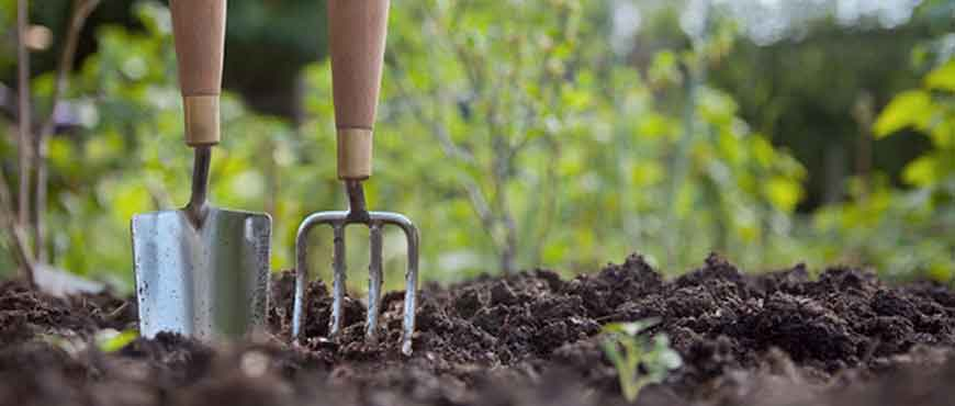 Lavori in giardino nel mese di febbraio magica servizi - Lavori in giardino ...