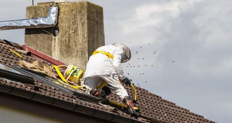 disinfestazione calabroni vespe zanzare varese milano