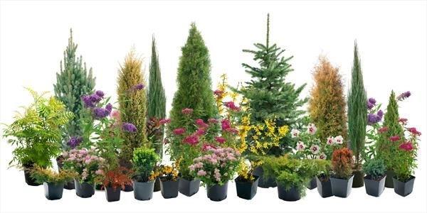 noleggio piante Milano