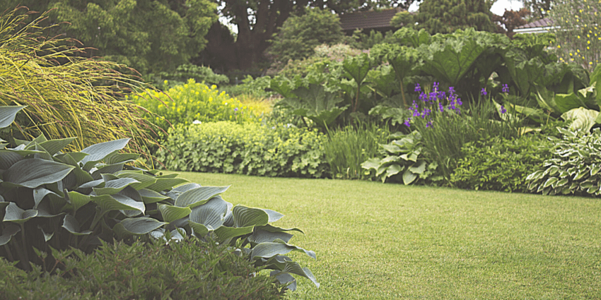 Se il prato verde è ottenuto da un manto erboso naturale, esistono delle tattiche e delle tecniche colturali che consentono di mantenerlo a lungo sano e con un colore verde brillante e luminoso.